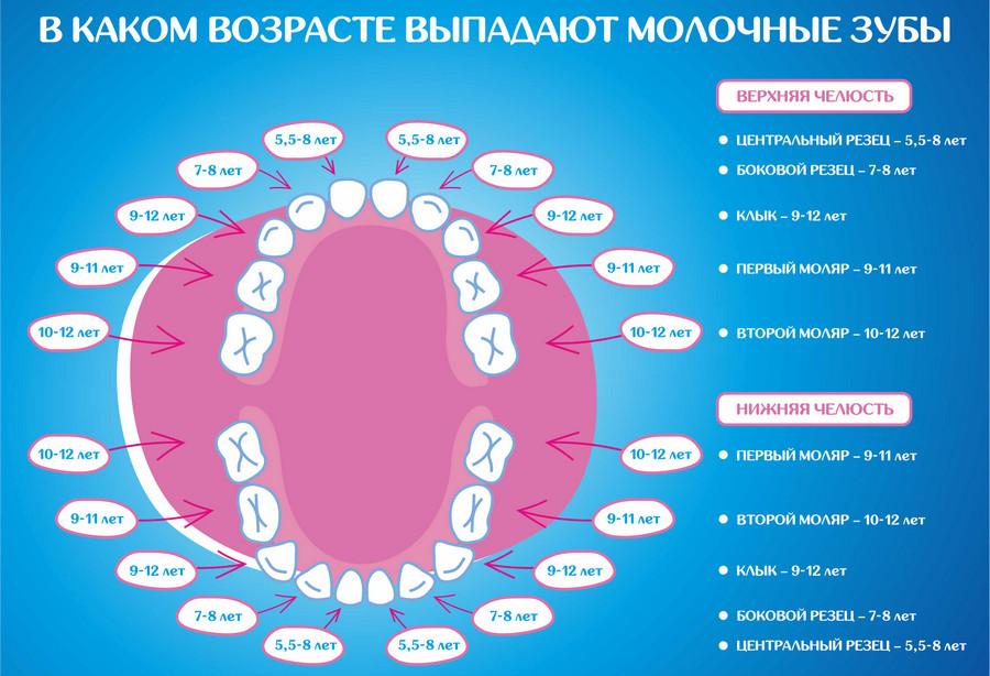 схема замены молочных зубов