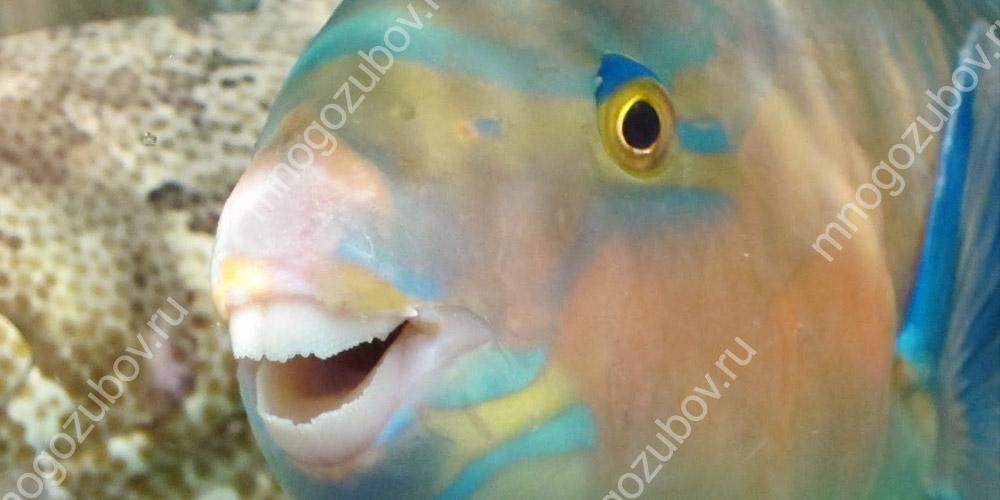 Улыбка рыбок